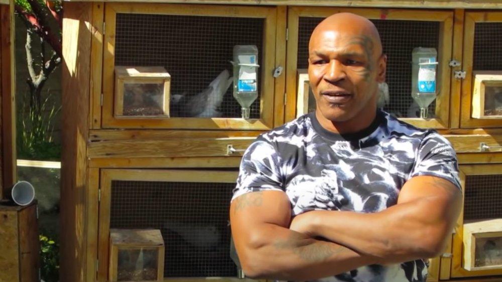 Mike Tyson y su hábitat de palomas