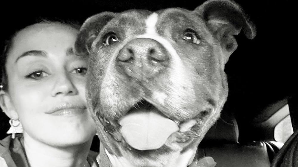 Miley Cyrus y su perro Angel