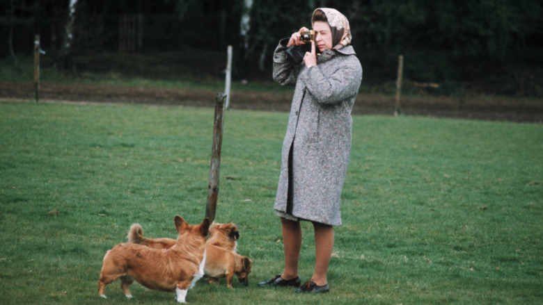 La reina Isabel y sus perros corgi